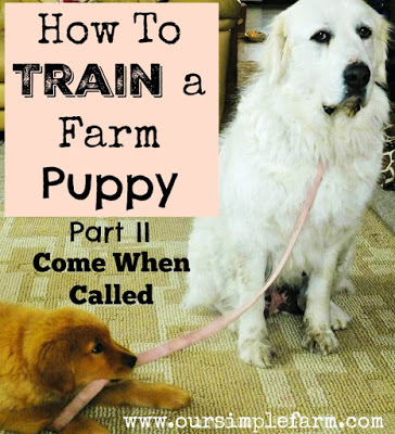 How Do I Train My Dog To Come When Called